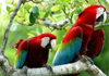 macaws, exotic birds for sale in india